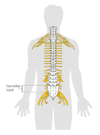Pictorial simplification of 'Sacroiliac-Joint' in human body