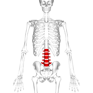 A skeleton structure in which 'spinal stenosis' is highlited