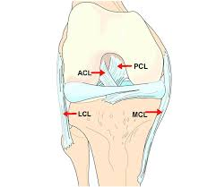 A knee structure ellaboration
